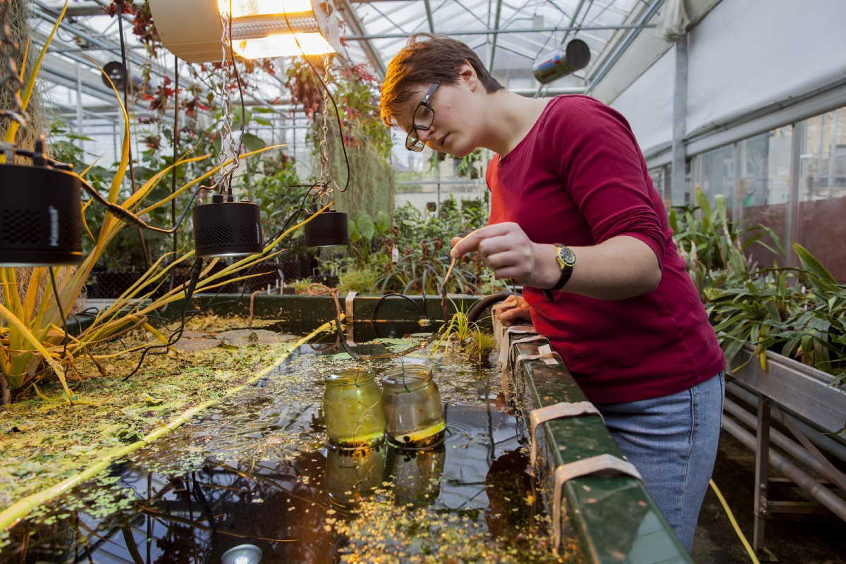 Cambridge Botanical Gardens >> The trainee horticulturalist who believes gardens are for ...