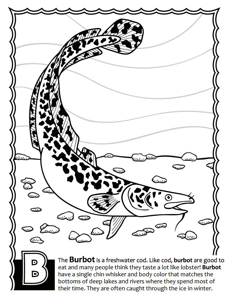 Fond Of Fish A Few Free Coloring Books Just For You