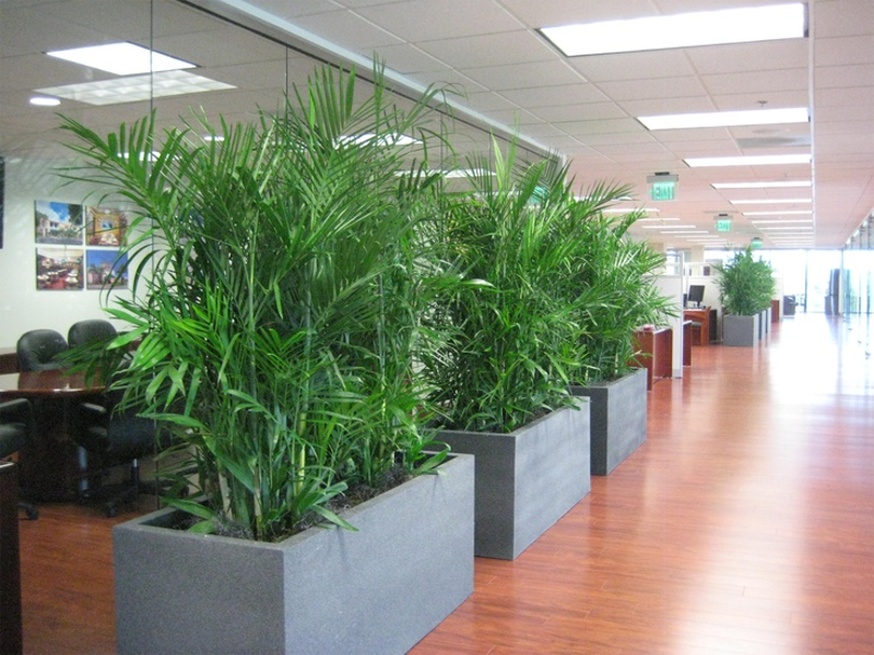 Design Your Office With Beautiful Interior Plants Inscape Indoor