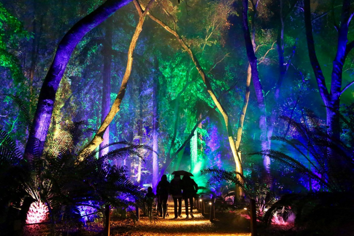 La descanso gardens enchanted forest of light no - Descanso gardens enchanted forest of light ...