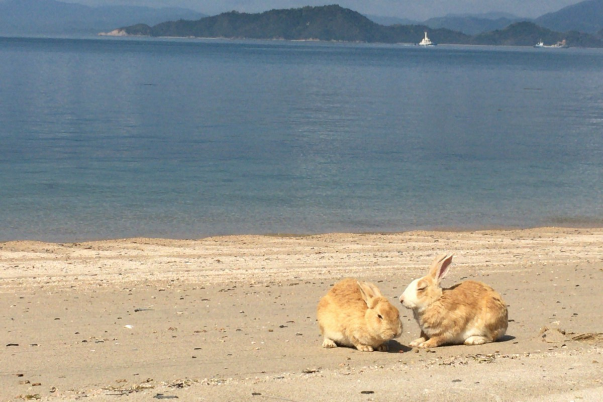 Okunoshima Island A K A The Rabbit Island Is A Small Island Located In Seto Inland Sea In Hiroshima Prefecture The Island Played A Key Role During World