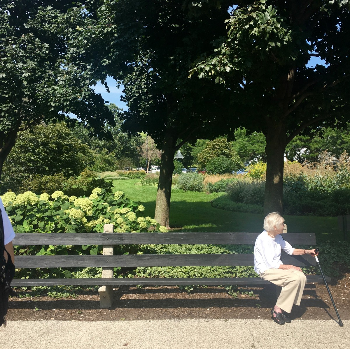 Sunday Afternoon Walk In Owen Park >> How To Be Alone In Lincoln Park Walking Chicago Medium