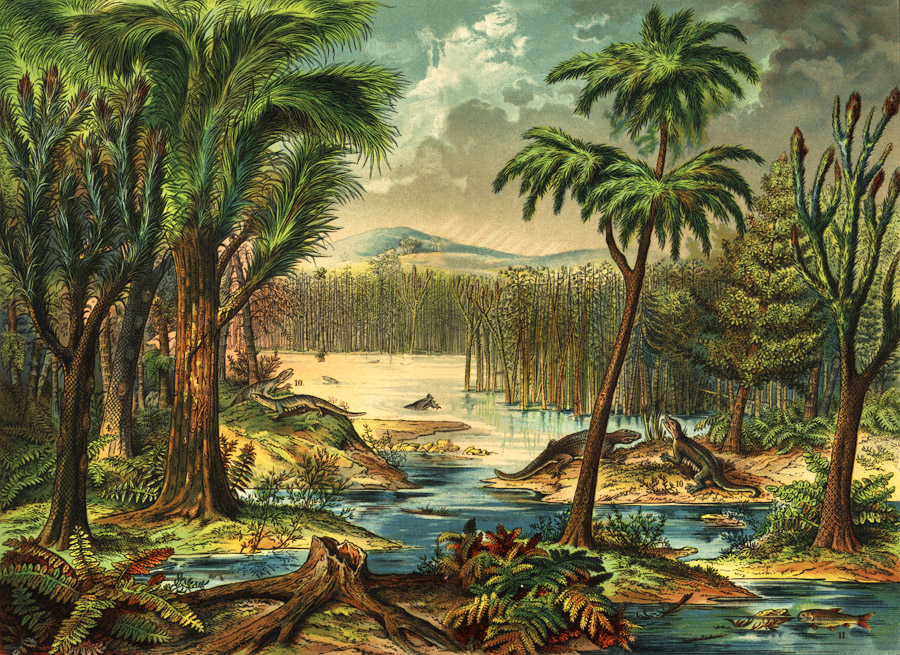 Carboniferous Rainforest Collapse Botany Thoughts Medium