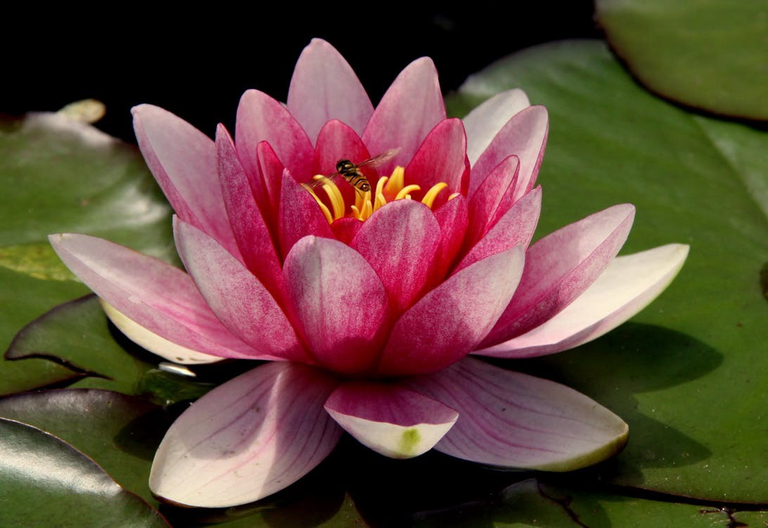 Journal entry 1 island of the lotus eaters brooke dunkley to the island of the lotus eaters the natives that live there were nice enough but to my dismay they constantly asked us to eat their lotus flowers mightylinksfo