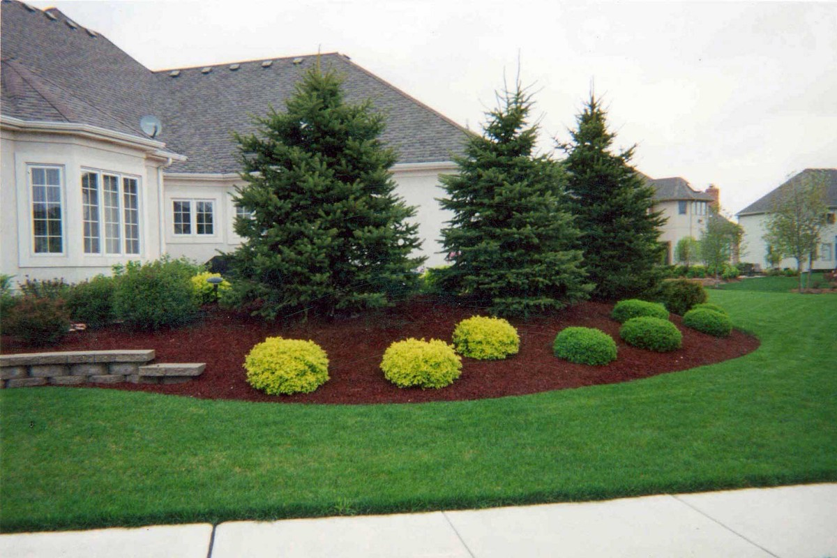 Evergreen trees everything you ve ever wanted to know for Landscaping shrubs