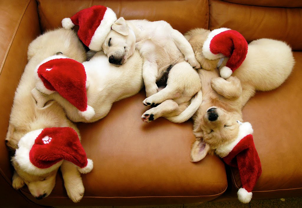 christmas puppies for sale substance