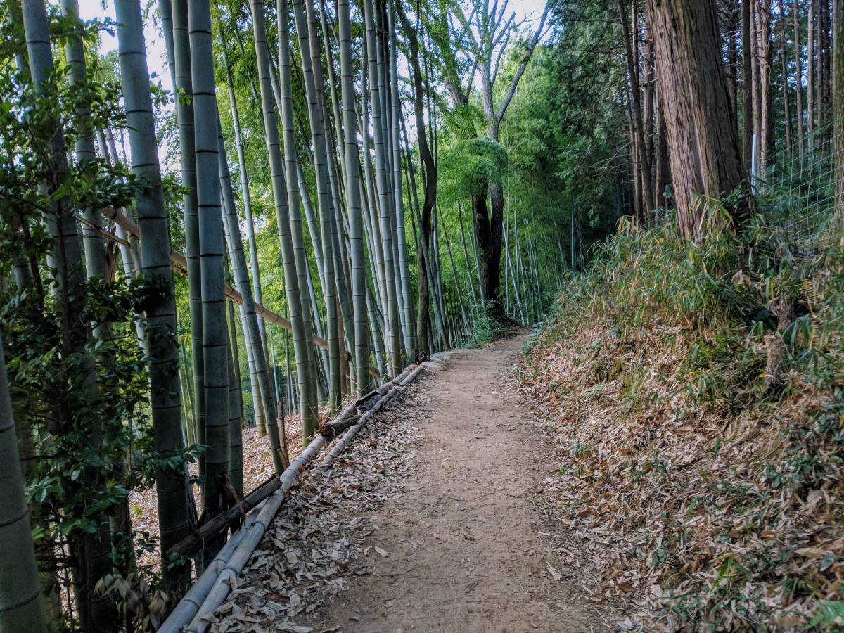 Bamboo Path Kyoto