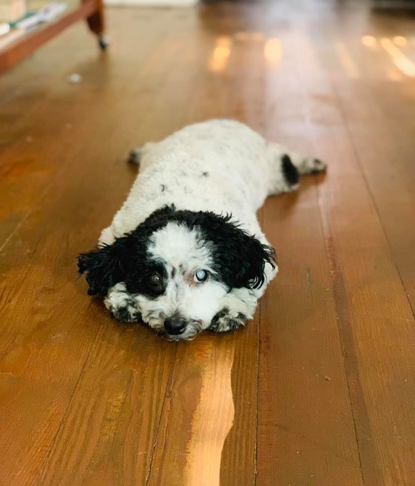 I adopted a special needs dog from a rescue and here is what I learnt about life, dogs and people.