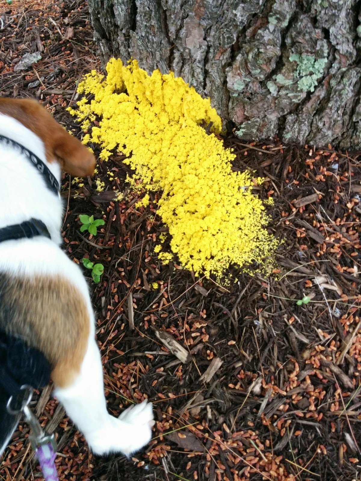 How Do Slime Molds Get Their Food