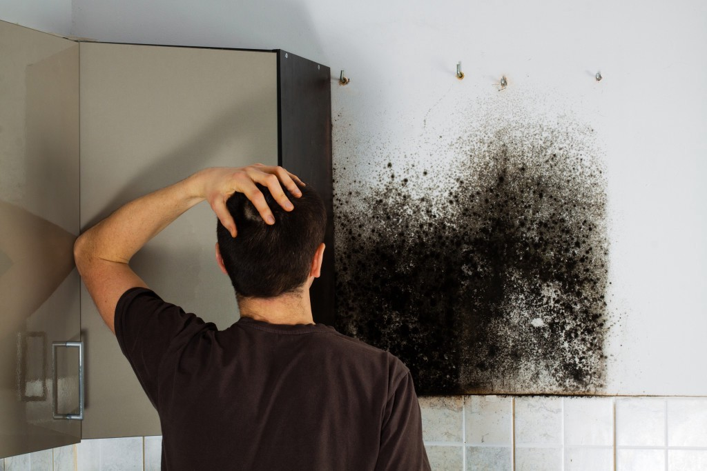 Image result for Mold Removal Services