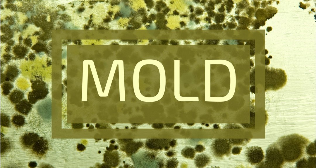 Mold Has Been Living On Our Planet For Millions Of Years And There Is Always Some Everywhere The Infamous Toxic Which Refers To Varieties