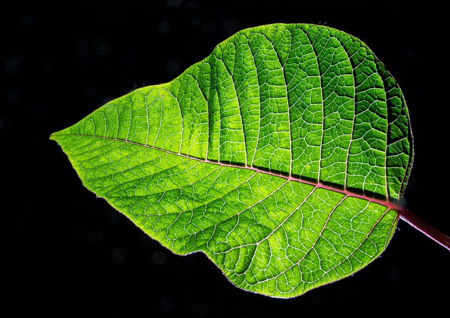 importance of sunlight in photosynthesis
