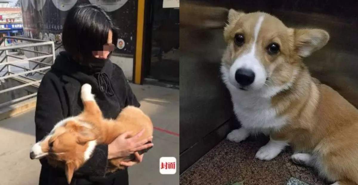 Woman asks for money to return girl's lost dog, ends up throwing it out 6th floor window