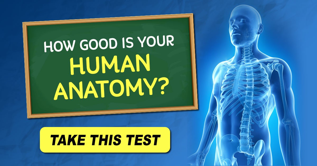 How Good Is Your General Human Anatomy Take The Quiz Multiple