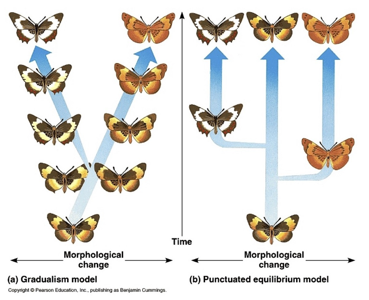 punctuated equilibrium Her research, which is based on the systems concept of punctuated equilibrium  group development, found that the timing of when groups form and actually.
