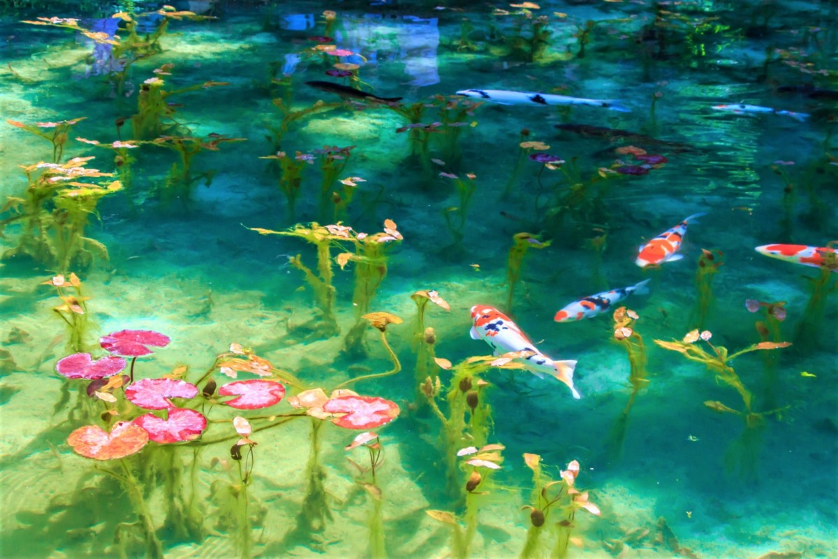 The Mystery Pond In Japan Looks Like Monet S Paintings