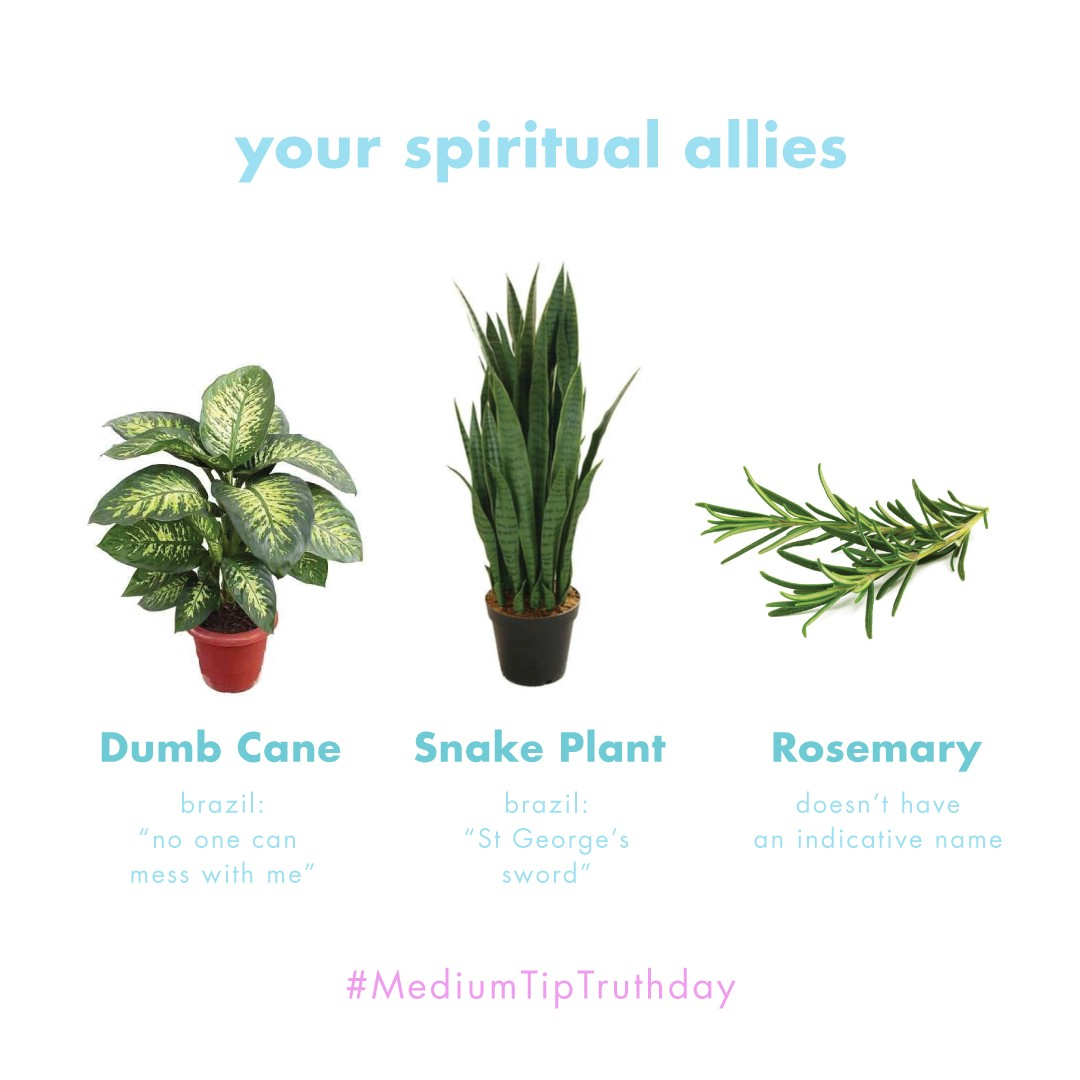 Spiritual Plants For Your Protection The Cosmos And Soul