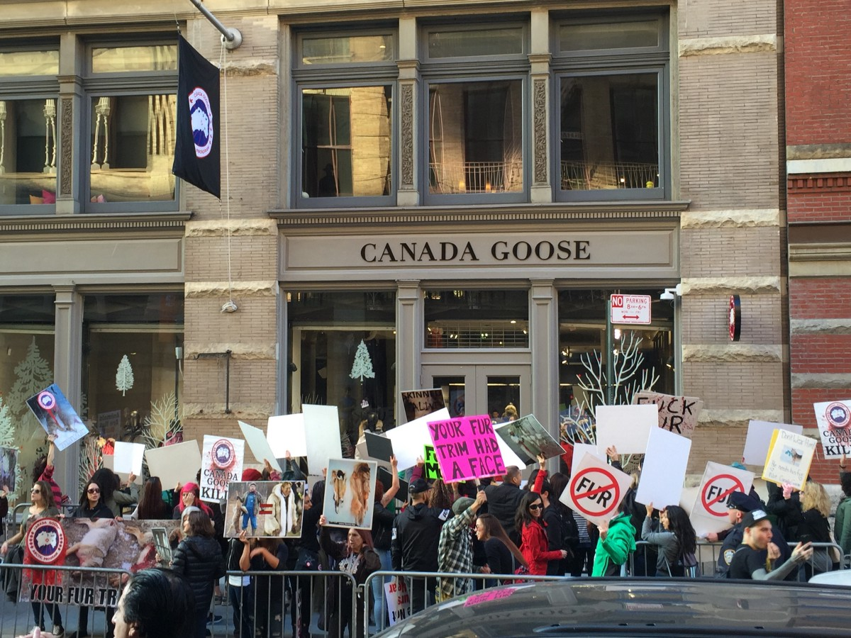 Coyotes joined about 100 protesters Wednesday in front of the Canada Goose store on Wooster Street. The coyotes did not carry placards because they have no ...