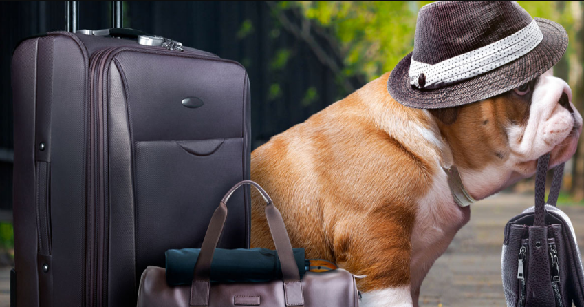 205184c7a6 We are leading specialised pet carriers international company for international  pet travel.