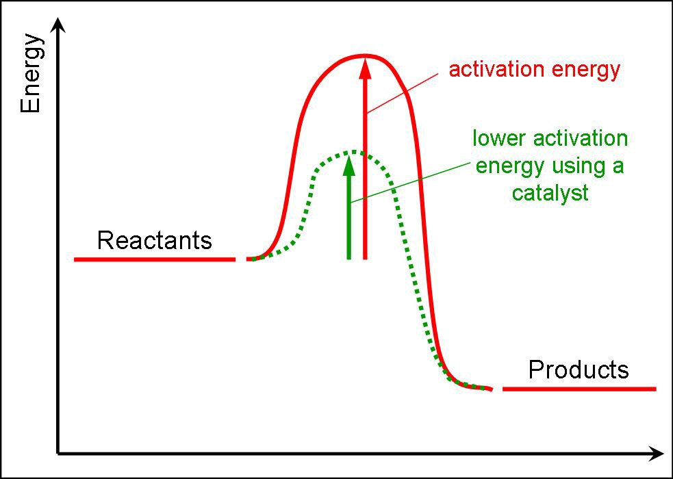 can decrease the activation energy needed to start a reaction