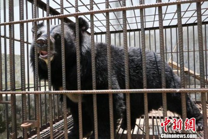 Yunnan family shocked when pet 'dog' they had been raising for 2 years turns out to be a bear