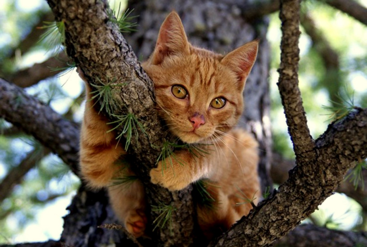 have you ever seen a cat skeleton in a tree the impact of the fire service s growing mission. Black Bedroom Furniture Sets. Home Design Ideas