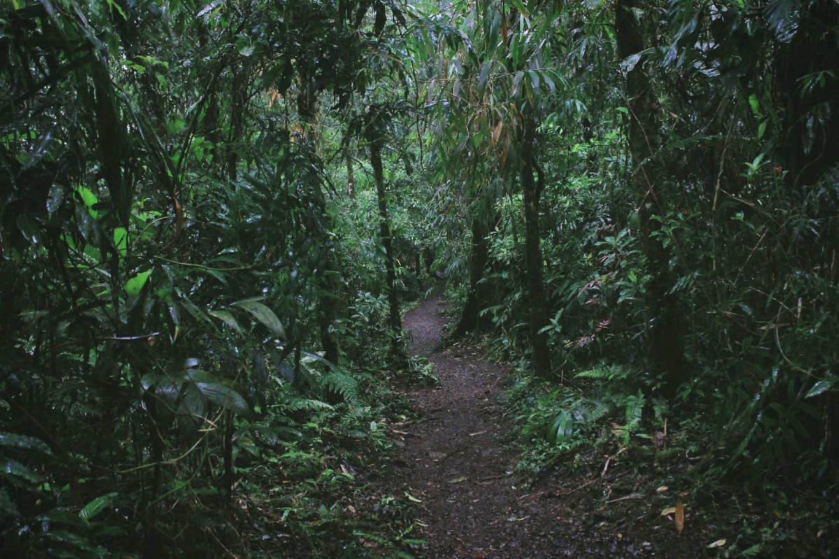 find your way in the jungle of data analysis tools