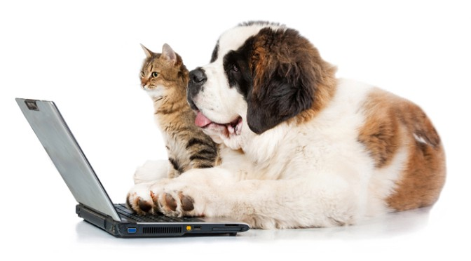 how to teach a computer to distinguish cats from dogs