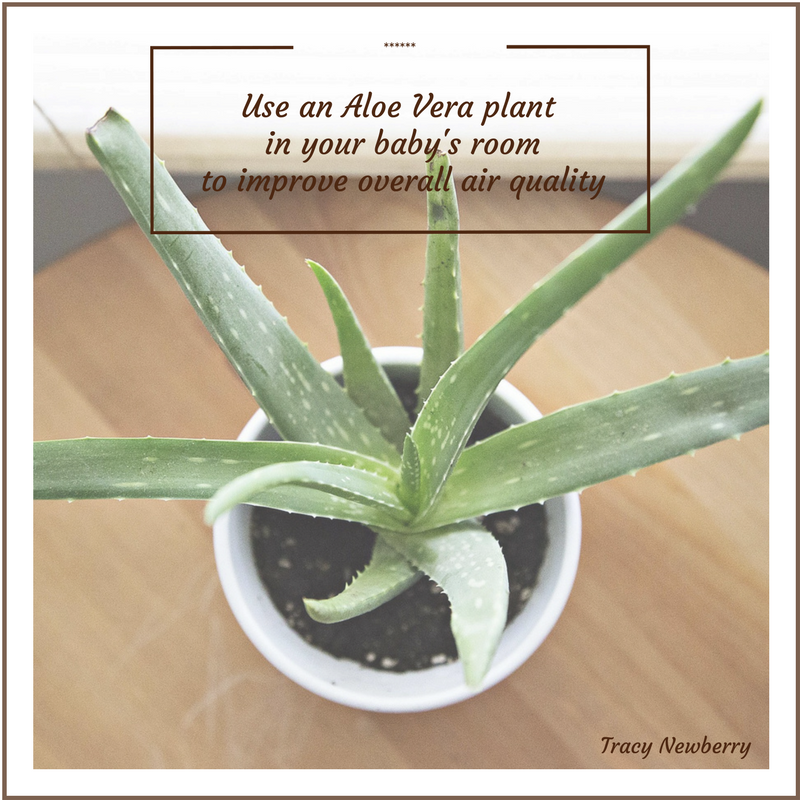 Use an aloe vera plant in your baby s room to improve overall air quality - Aloe vera plante utilisation ...