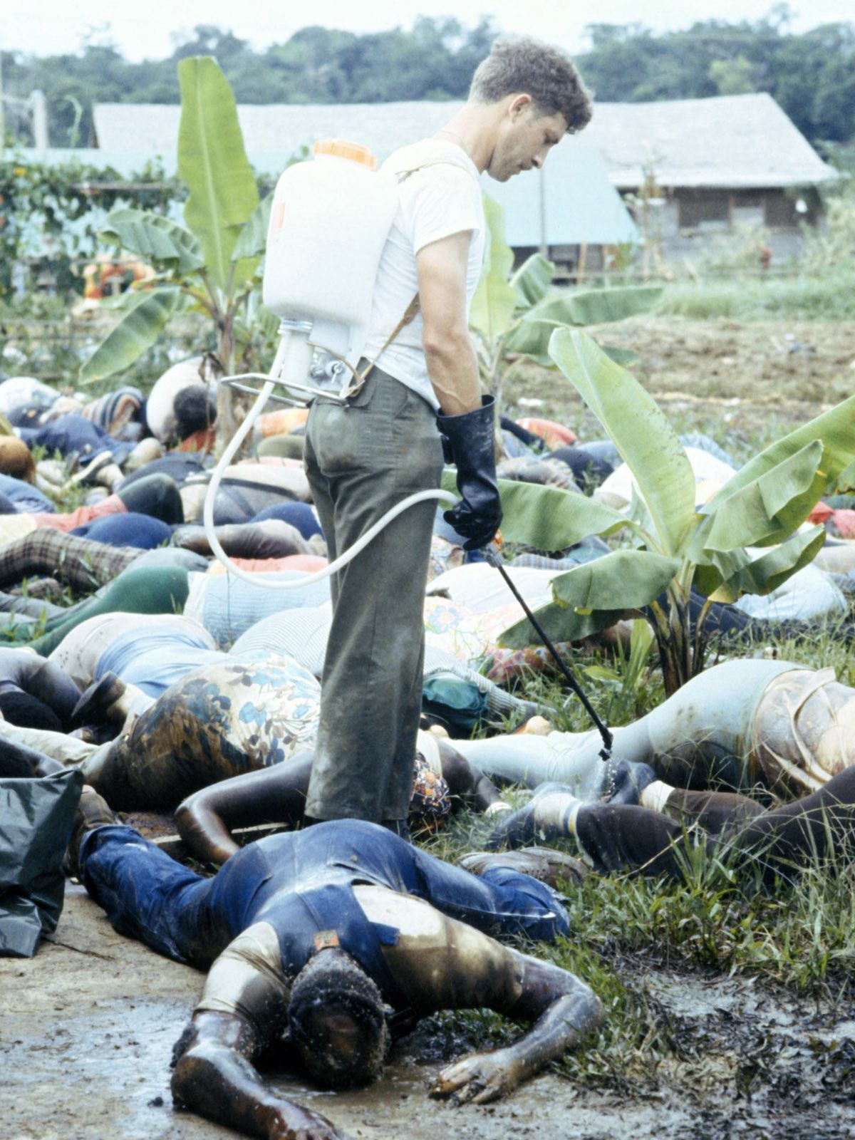 By the time US Troops arrived at Jonestown, the bodies were heavily decomposed (credit: US Army)