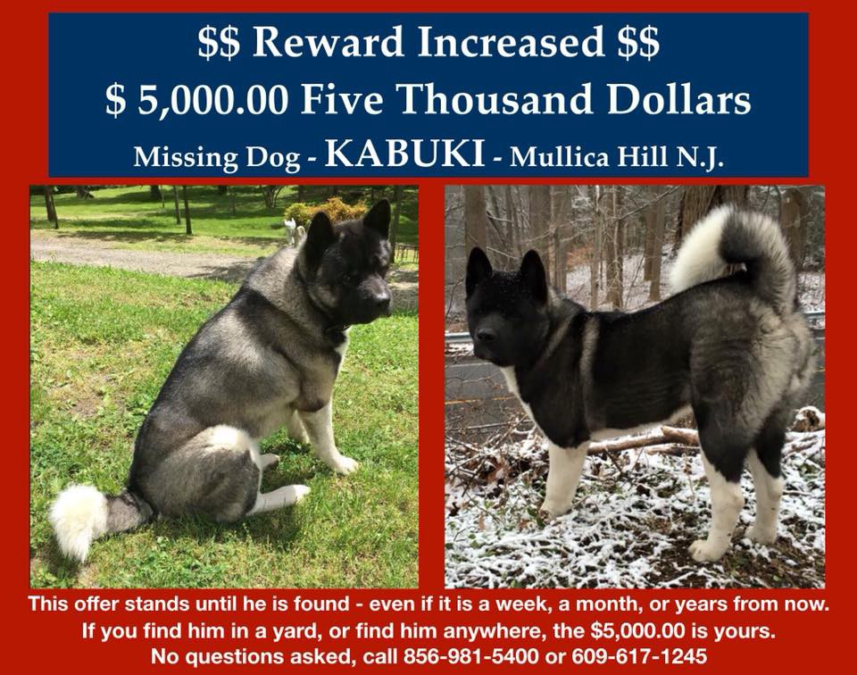 mullica hill family offers 5 000 reward for lost dog