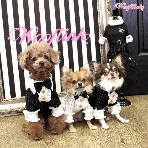 bloomingtails dog boutique signature style small dogs clothesbloomingtails dog boutique is a premier online dog boutique of designer clothes for small dogs this boutique is known for offering top quality pet dog
