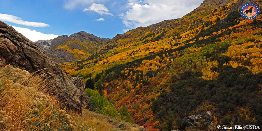 Say No to Fracking Nevada's Ruby Mountains! – Wild Without End – Medium