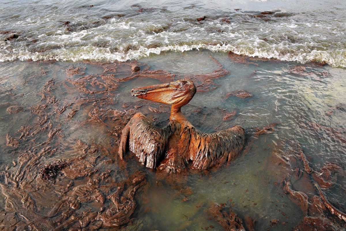 Bp oil spill photographs Athabasca oil sands - Wikipedia