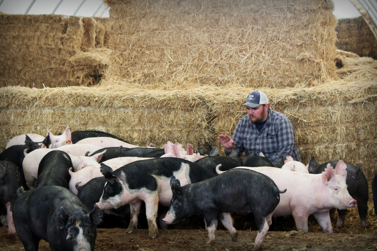 Im Careful To Listen For Warning Signs When Walking In My Barns Like A Cough Or Sneeze If We Determine That The Pig Is Sick There Number Of