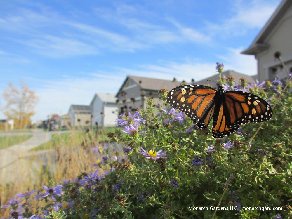 Our Gardens Are at the Center of Vanishing Bees and Butterflies— and in Saving Nature.