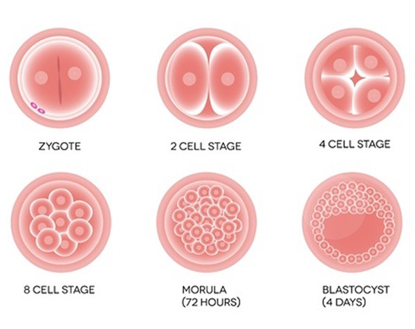 IVF with Blastocyst Transfer