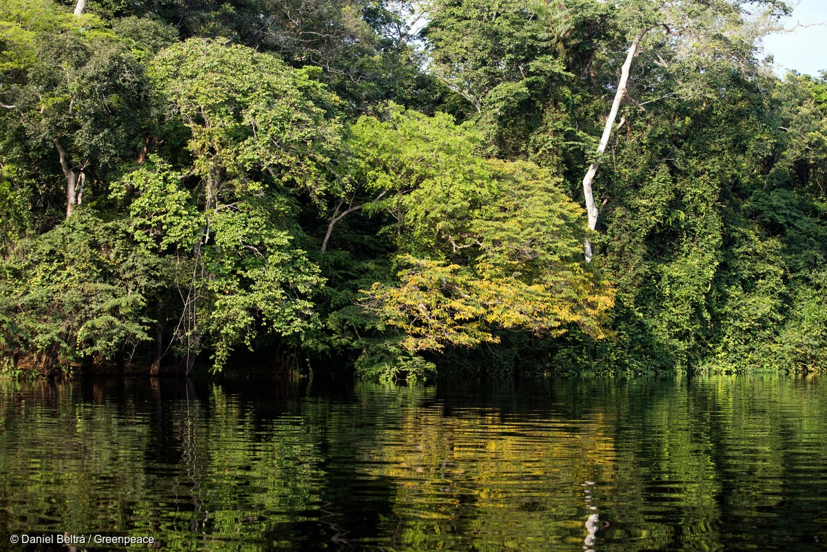 Why We Re Sailing Into The Congo Basin Forest Greenpeace