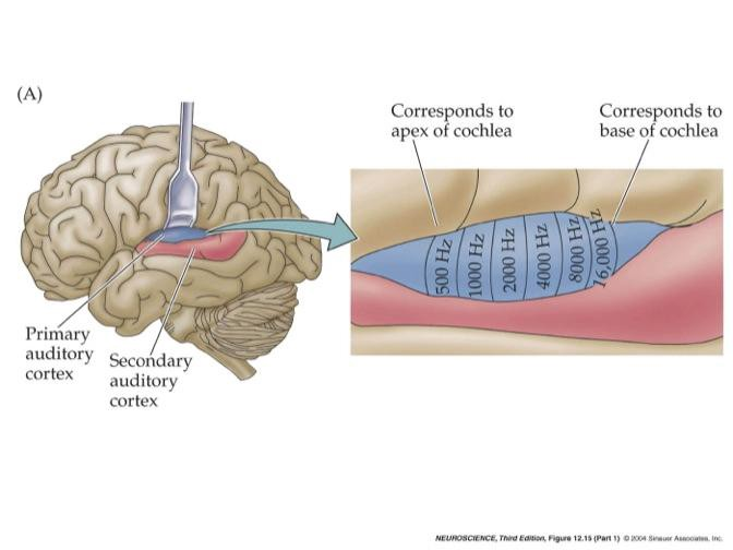 Maps In The Brain Disability Science Review Medium