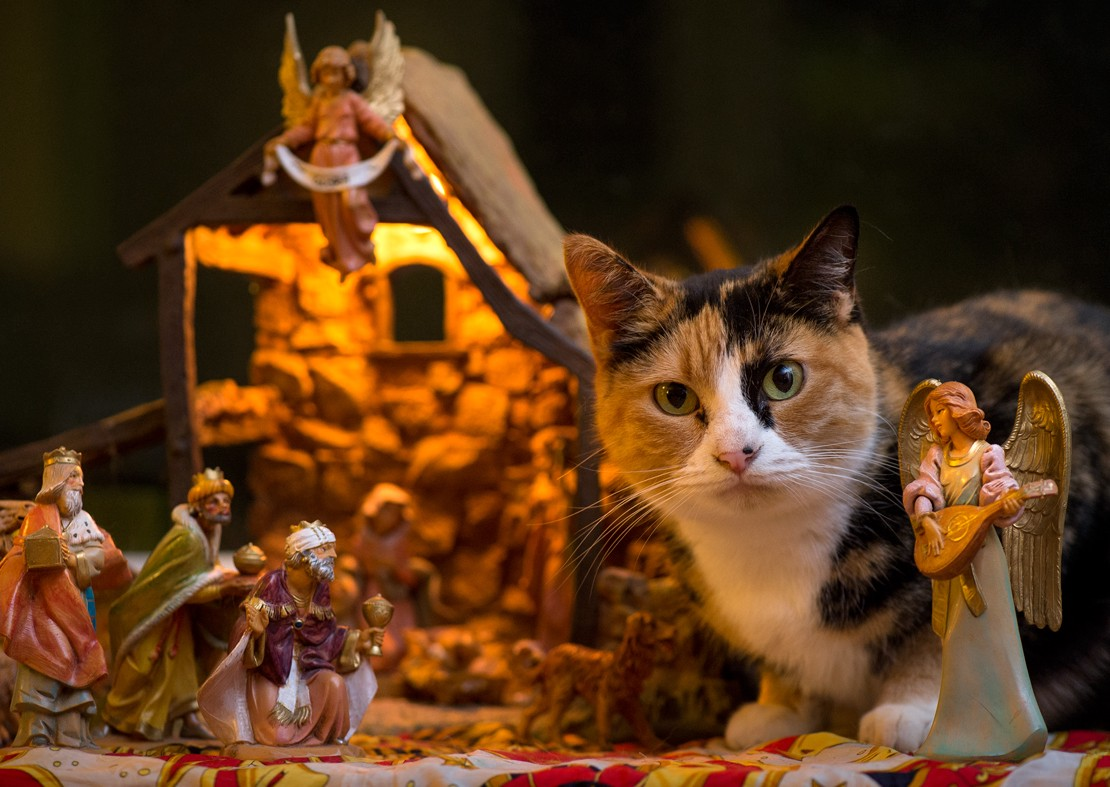 cats demand rightful place in nativity scene with sheep