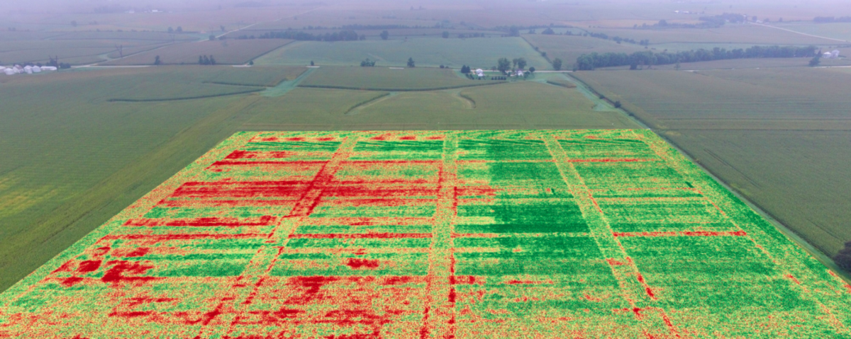 Farmers House Insurance >> Drone Map Shows Improved Standability of Corn Crop – DroneDeploy's Blog