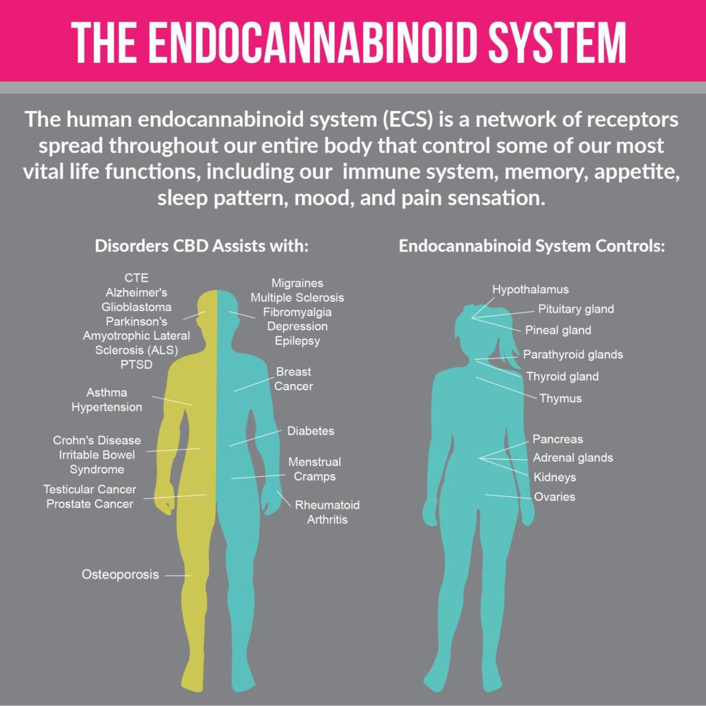 hemp oil extract and endocannabinoid system, cbd