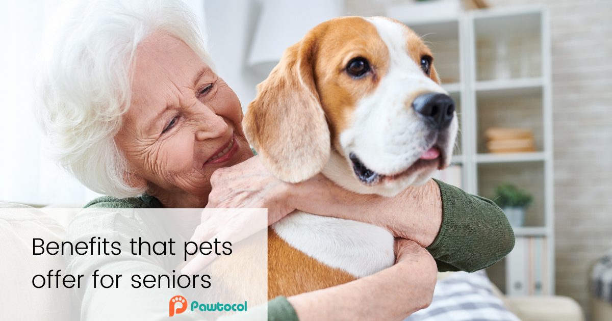 Benefits that pets offer for seniors