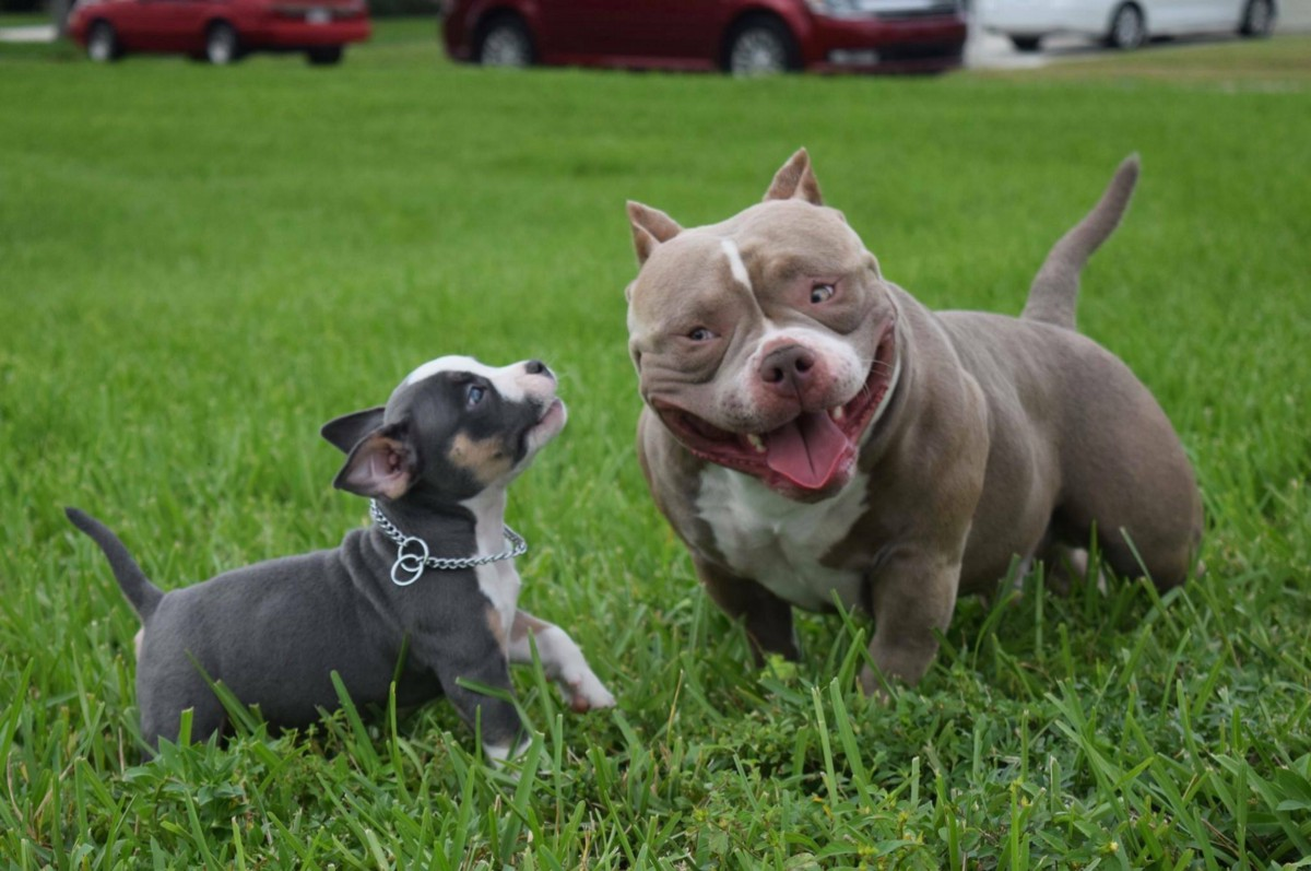 Fastest Growing New Er Dog Breed In The World The