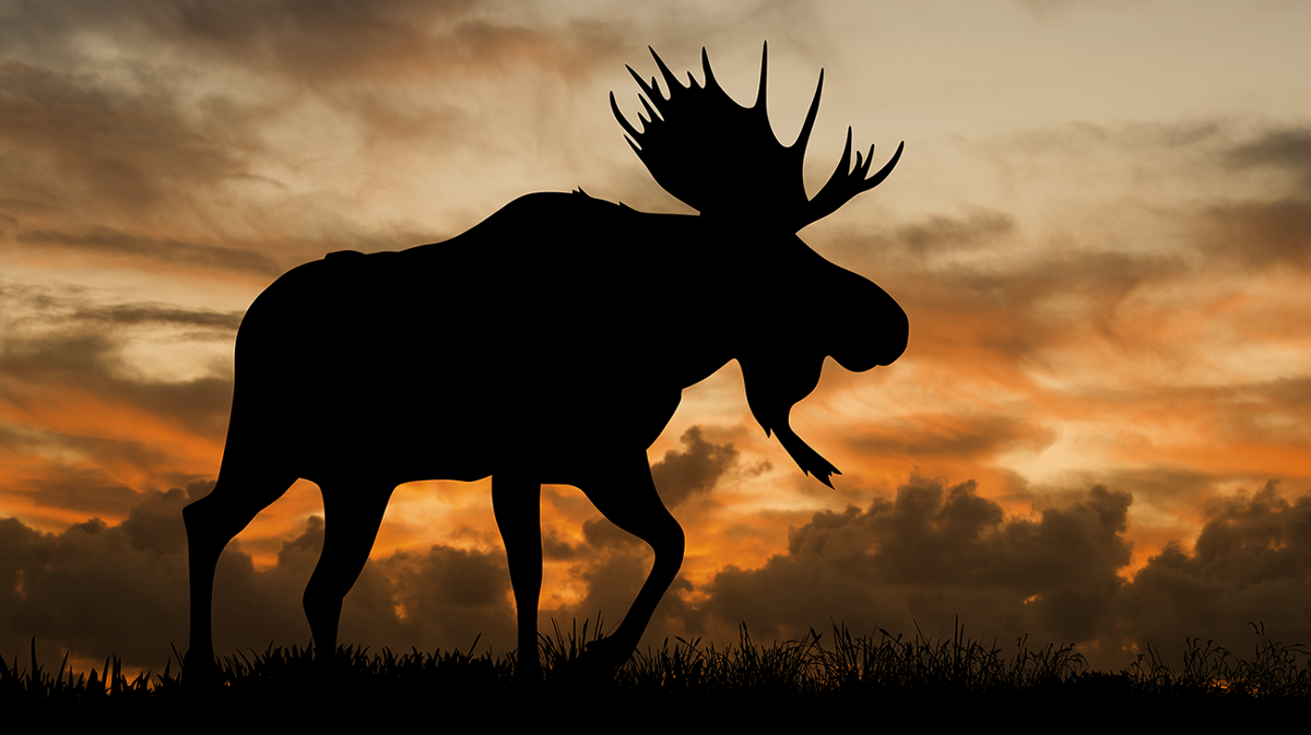 Climate change and moose a case study positive peer - A live nature wallpaper ...