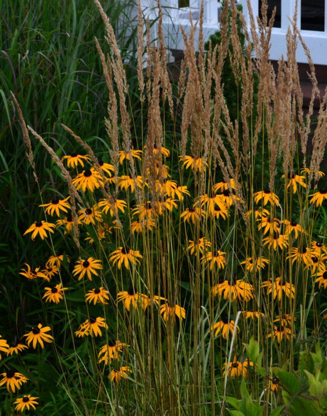 Designing with ornamental grasses and perennials - The ...