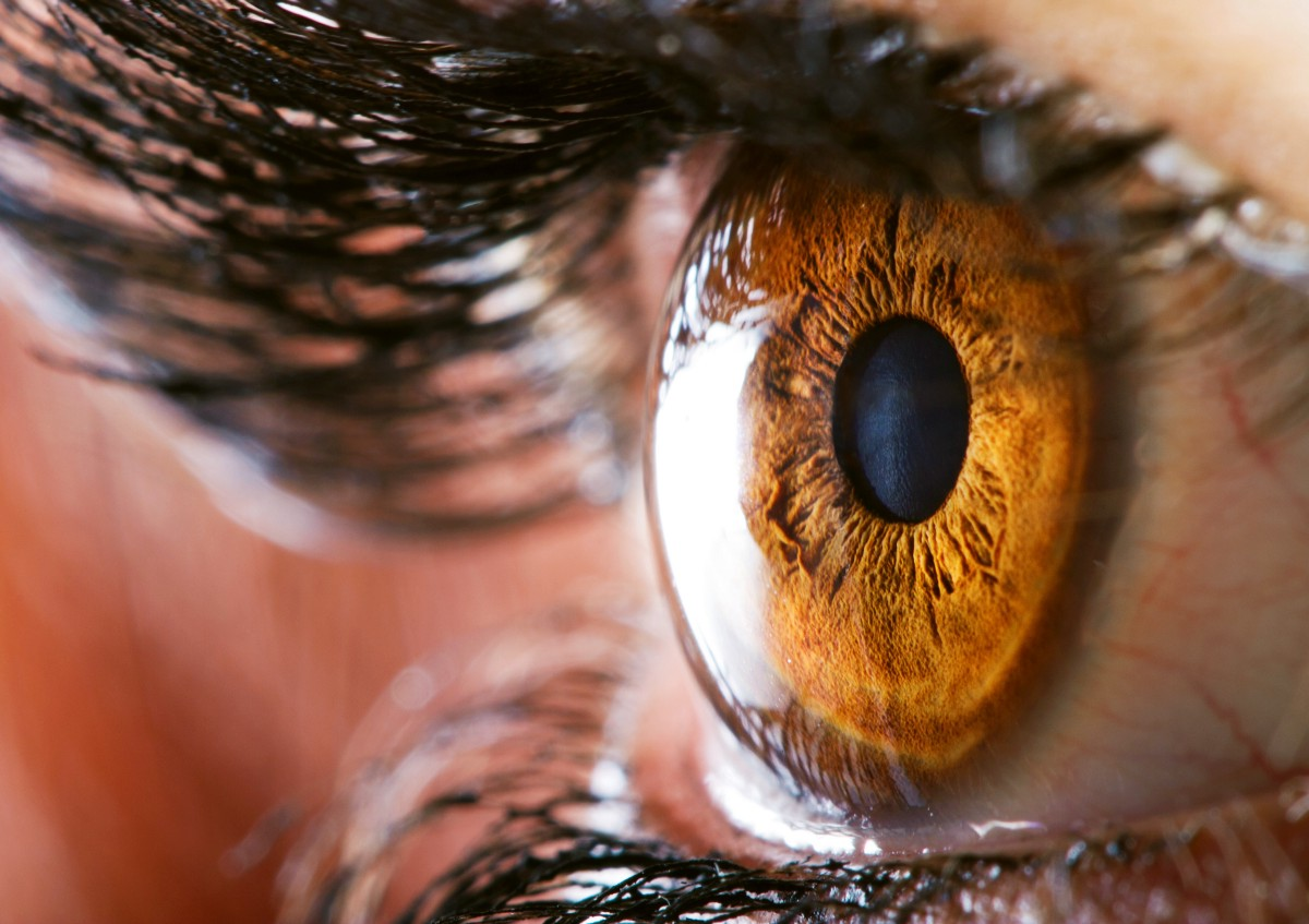 What\'s the difference between a camera and a human eye?