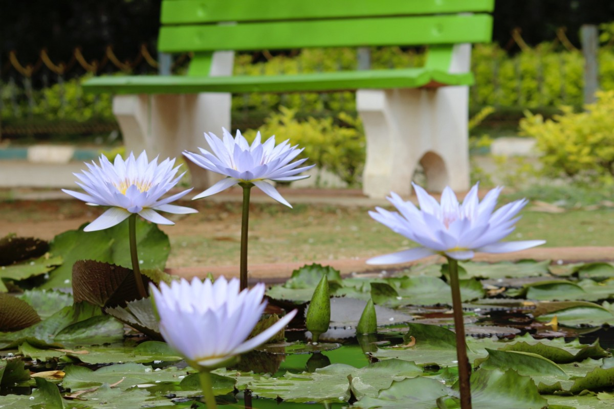 Birds in a busy city param aggarwal medium the lotus the national flower of india izmirmasajfo