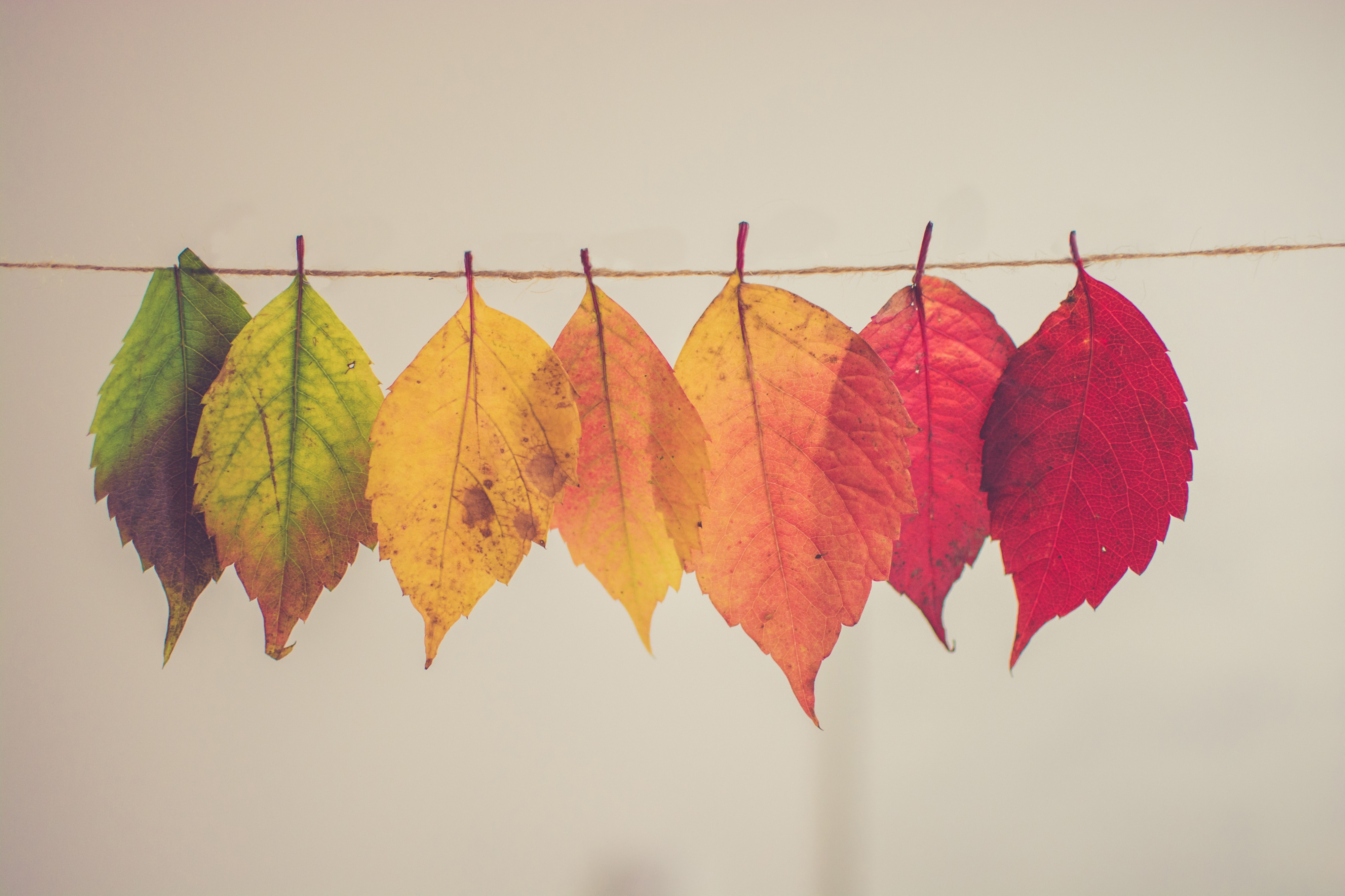 """""""assorted-color lear hanging decor"""" by Chris Lawton on Unsplash"""