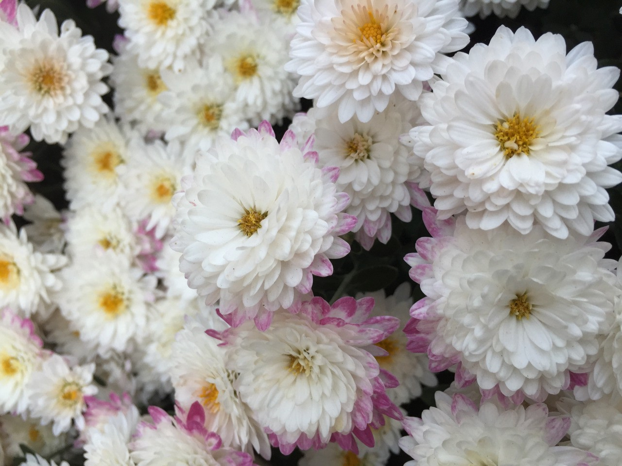 What Flower Are You Arby Iyer Medium